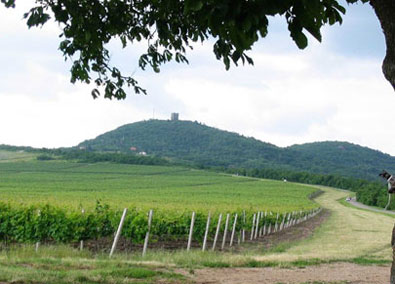 Vrsacki vinogradi_3